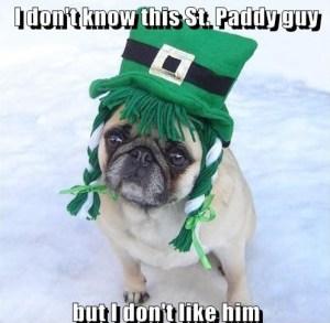Funny-St-Patrick-s-Day-Pug-Dog-Meme-memes-33928908-497-486