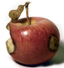 rot apple