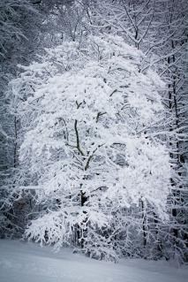 snow-246119_960_720.jpg