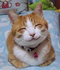 So_happy_smiling_cat.jpg