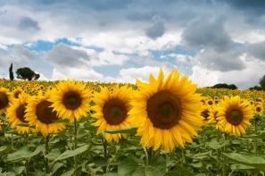 nature-field-summer-quantity.jpg