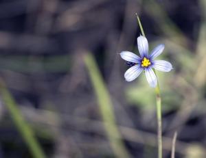 flower-2372998_1920